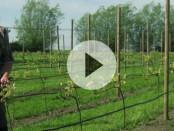 Att vingårdar är vackra var en morot när Erik Widmark bestämde sig för att börja odla vin. Foto: Maria Rosén